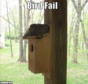 fail-owned-bird-fail
