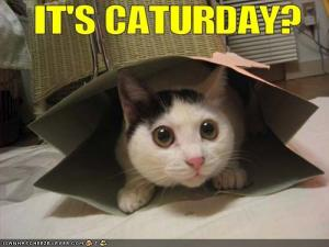 funny-pictures-cat-is-excited-for-caturday