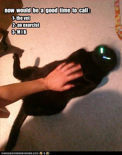 Curiosidades Y Bromas. Funny-pictures-your-cat-has-a-problem1