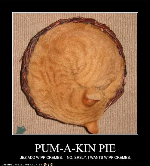 funny-pictures-your-pumpkin-pie-wants-whipped-cream